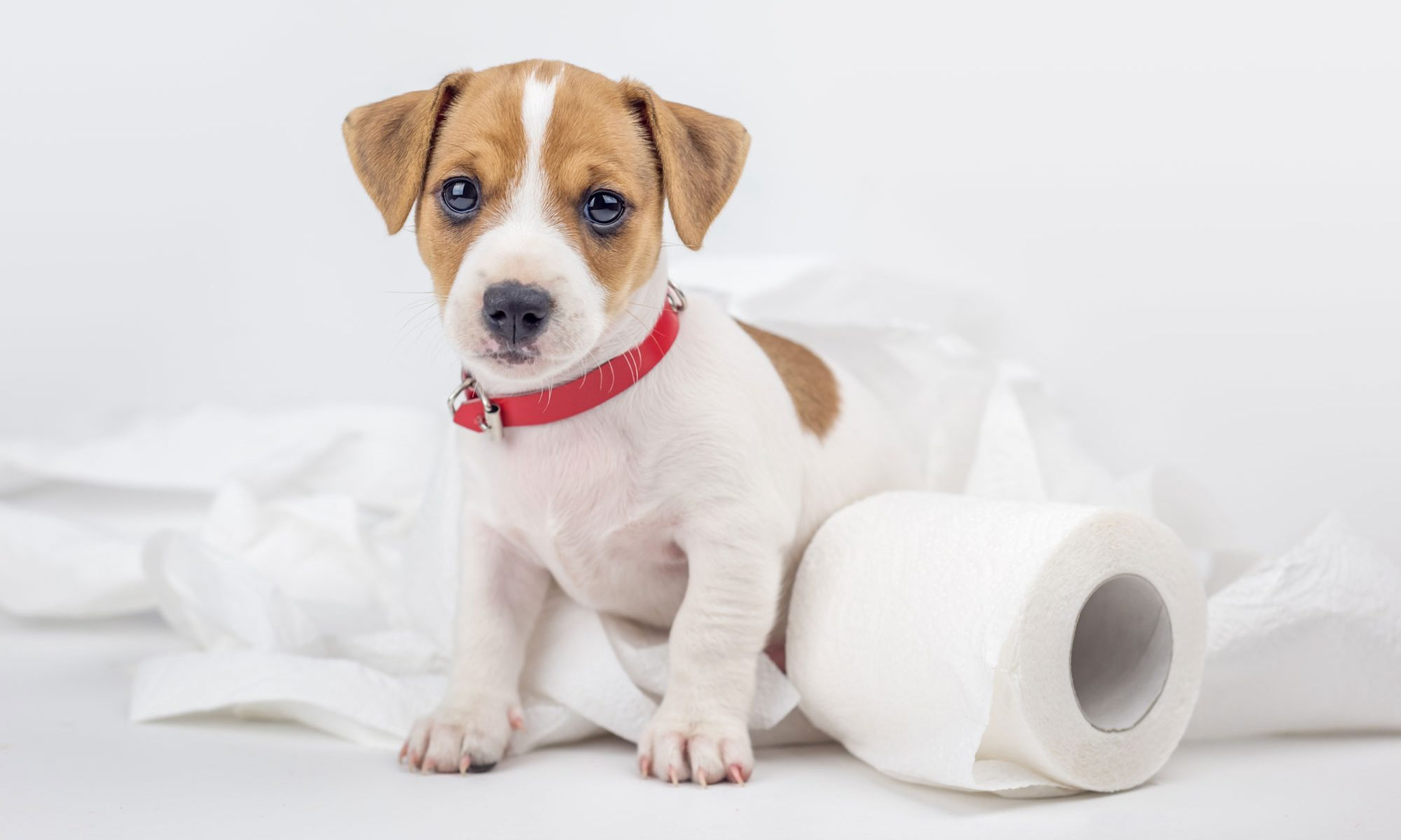 Tri-Cities Carpet Cleaning and Restoration Pet Accidents